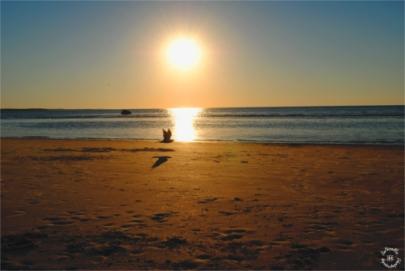 Golden Hour Cape Cod