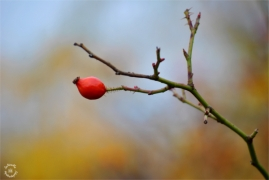 The red of autumn